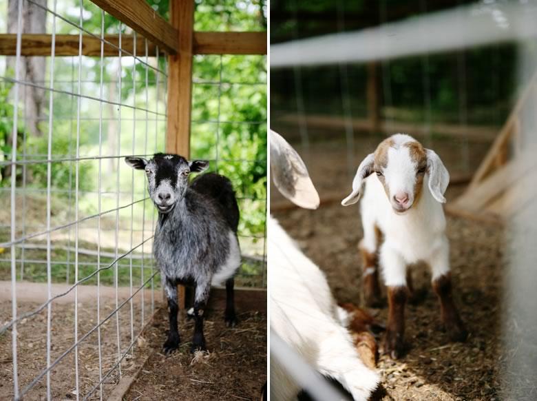 fenders-farm-wedding (21)